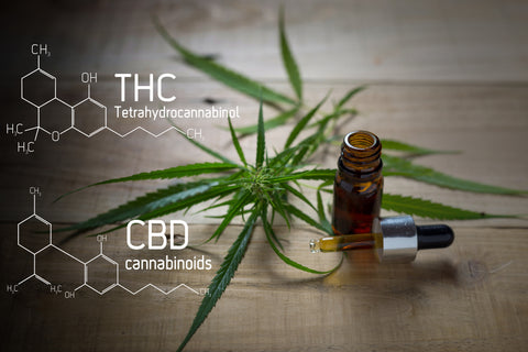 Medicinal cannabis with extract oil in a bottle of Formula CBD THC