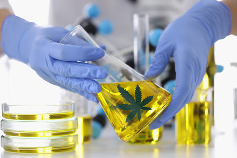 Hands in rubber gloves holding flask with marijuana extract closeup