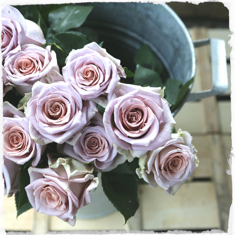 Just a Dozen Beautiful Roses - Friday Delivery Only