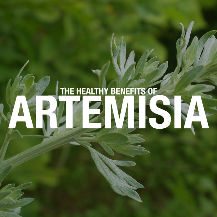 The Healthy Benefits of Artemisia