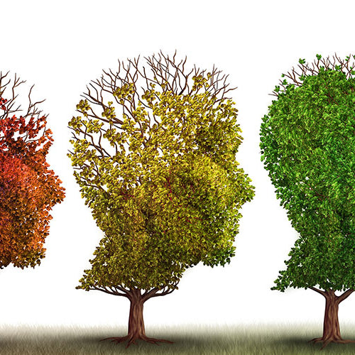 Aging Brain Health Decline: Causes, Preventing & Reversing