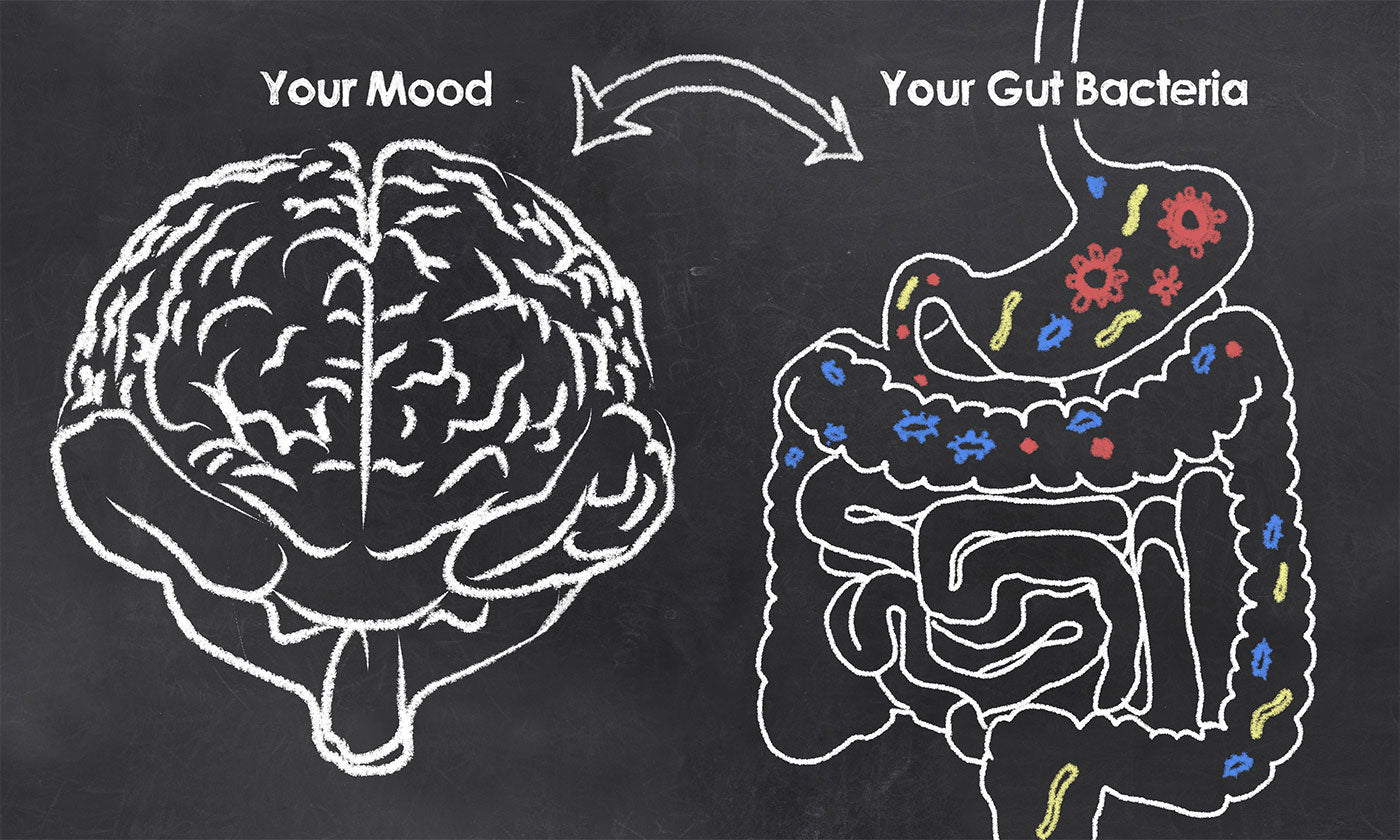 How Gut Health Affects Everything
