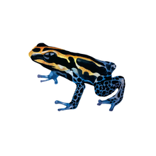 Load image into Gallery viewer, Amphibians