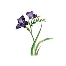 Load image into Gallery viewer, Flowers (Set I)