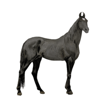 Load image into Gallery viewer, Horses