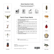 Load image into Gallery viewer, Insects