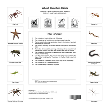 Load image into Gallery viewer, Invertebrates