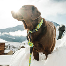 Load image into Gallery viewer, New to the RANGE Collection Wilderdog Leashes