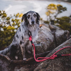 New to the RANGE Collection Wilderdog Leashes
