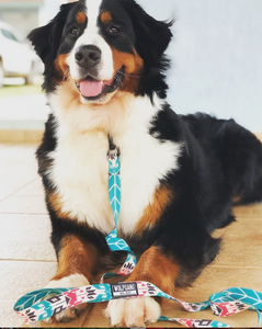 FurTrader Dog Leash