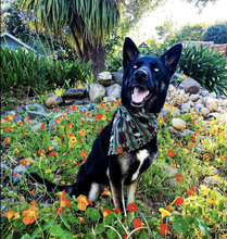 Load image into Gallery viewer, GFT Collection - Pet Adjustable Bandana