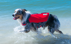 Granby Splash Dog Life Jacket by Outward Hound