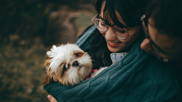 Shih Tzus make great pets