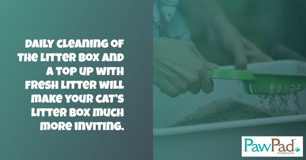 Cat Litter Training 101
