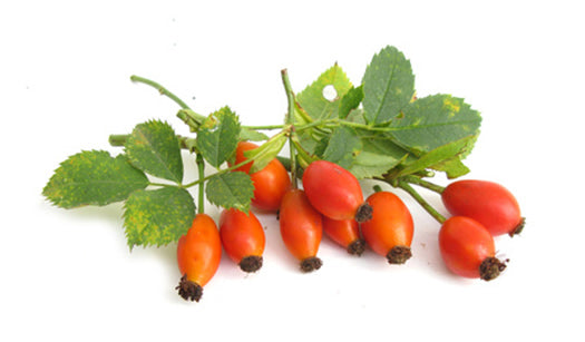Rosehip Scar Oil - for conditioning, smoothing and nourishing the skin. 100% natural.