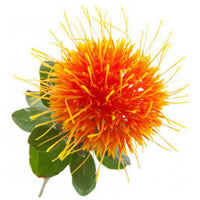 Safflower Seed Oil