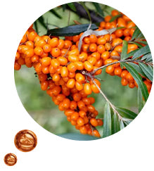 Sea buckthorn oil is full of skin nourishing vitamins and anti-inflammatory compounds making this the perfect ingredient to nourish and moisturise sore dry skin.
