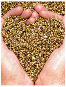 Hemp Chia and Flax seeds are high in essential fatty acids