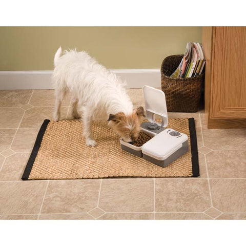 2 Meal Pet Feeder Gray