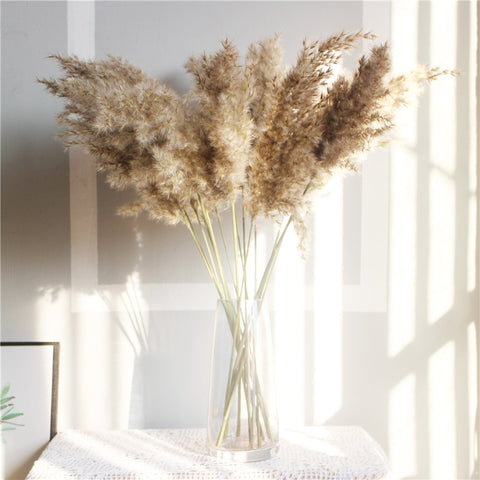 Natural Dried Pampas