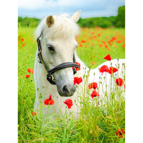 Diamond Painting - Full Round - White Horse