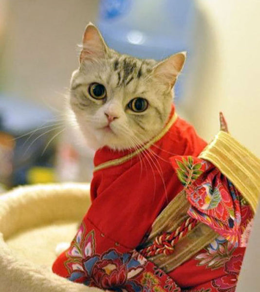 Cute cat in a traditional Japanese kimono
