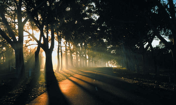 Honour Avenue (Lovekin Drive) at dawn (Credit I McLean)