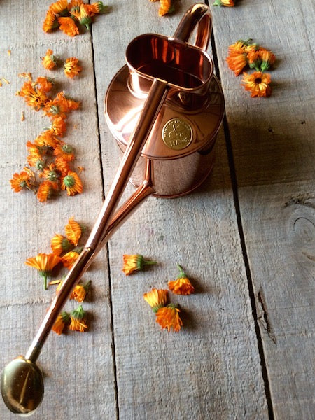 Copper watering can with brass rose