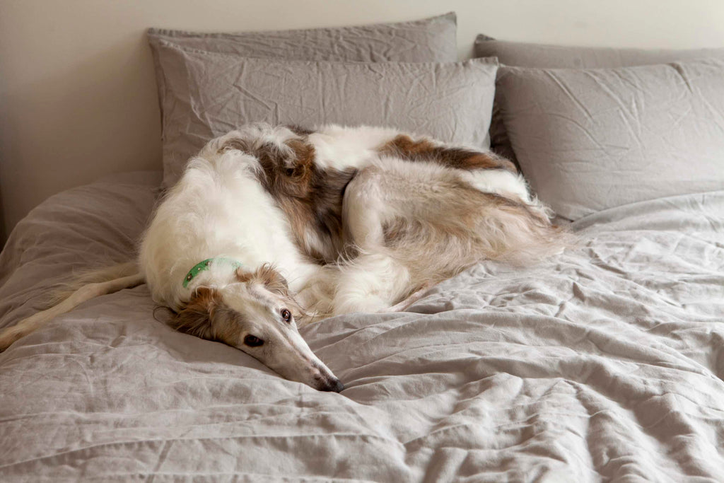 Odessa, a dog featured in our Journal, lying on IN BED sheets