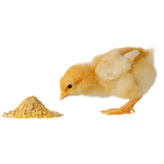 Starter Chick Crumbs Feed - Percy's Pet Products