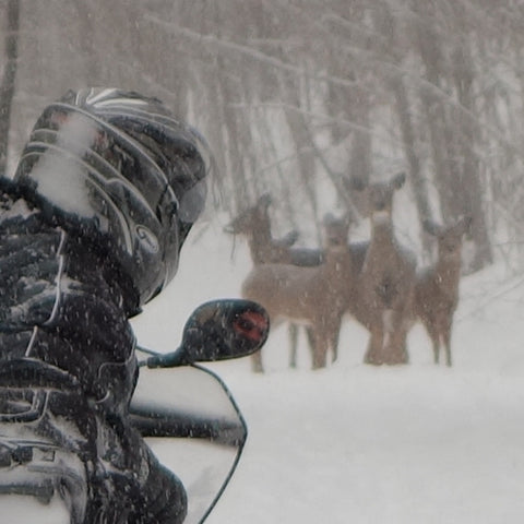 Deer on the snowmobile trail