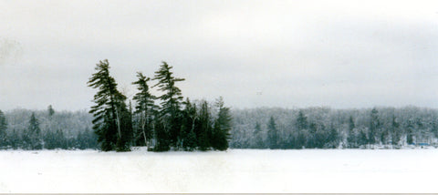 Winter Pines photo by Karen Richardson