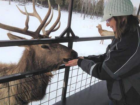 Karen Richardson hand feeding an elk
