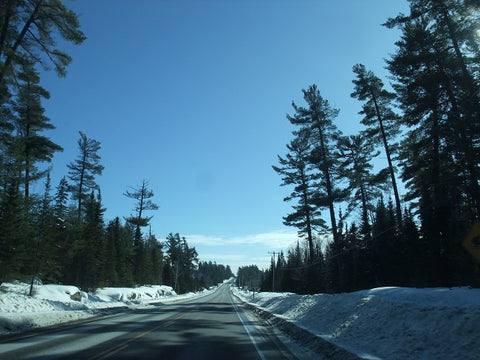 White Pines in the Temagami region of Ontario