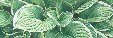 "Hosta Hodgepodge, 5 x 14"", watercolour framed with glass (SOLD)"