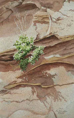 Between a Rock and a Hard Place Again, watercolour by Karen Richardson