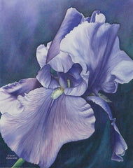 Blue Iris, watercolour by Karen Richardson