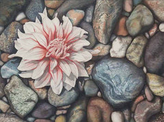 A Dahlia Down, watercolour painting by Karen Richardson