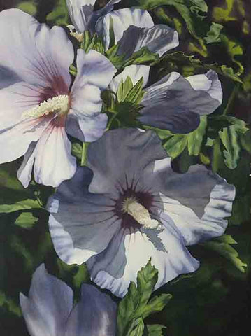 "Blue Rose of Sharon, 28 x 22"", watercolour on panel (SOLD)"