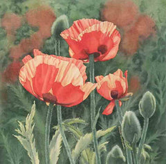 Poppies With Pizzazz, watercolour on panel, 12 x 12""