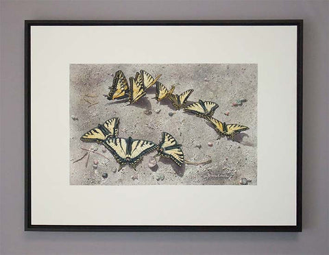 "Sunbathing Swallowtails (watercolour on panel, 18 x 24"")"