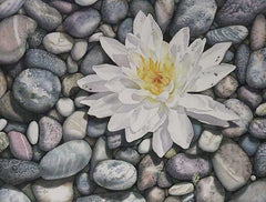 Waterlily on the Rocks, watercolour by Karen Richardson