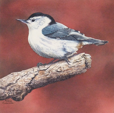 White Breasted Nuthatch, watercolour by Karen Richardson