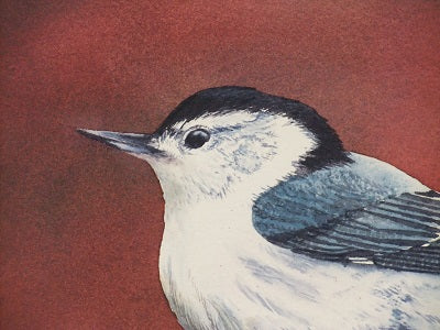 White Breasted Nuthatch (detail), watercolour by Karen Richardson