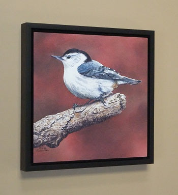 White Breasted Nuthatch (framed), watercolour by Karen Richardson