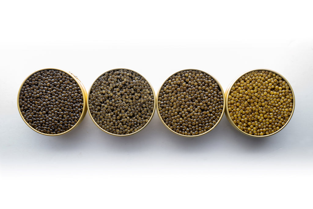 How Much is Caviar Worth?