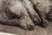 Load image into Gallery viewer, HALFSLEEP - LIMITED EDITION INTAGLIO PRINT