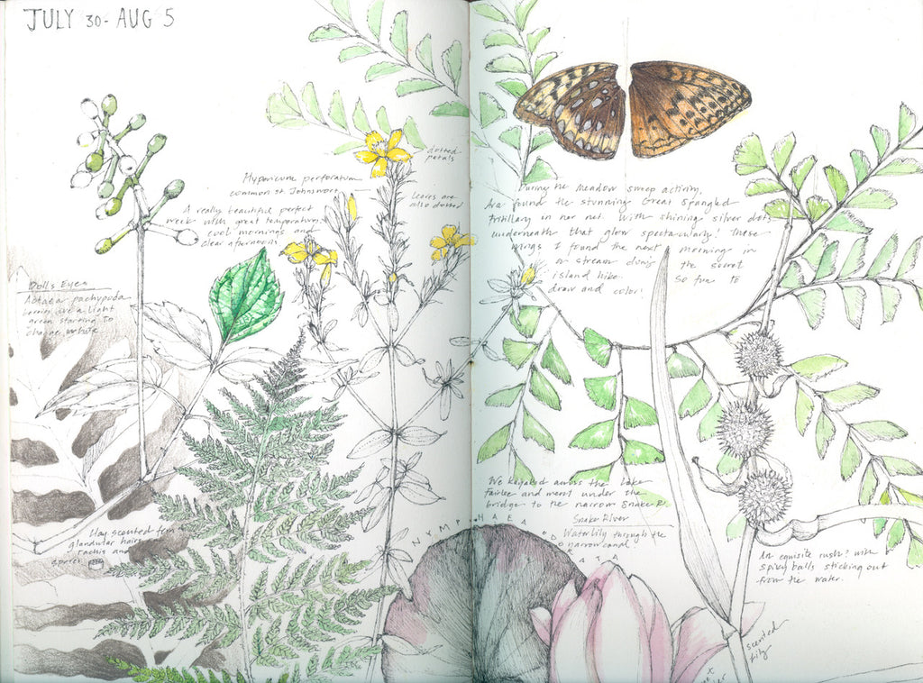 INTERVIEW // Botanisch tekenaar Lara Call Gastinger | INTERVIEW // Botanical artist Lara Call Gastinger