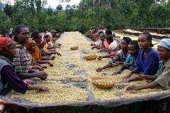 Sorting Coffee in Ethiopia