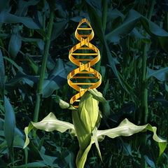 Genetically Modified Foods - Common (FGM)